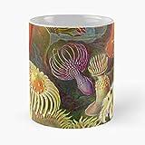 1900 Flora Kunstformen Natur 1800 Der Natural Ernst Fauna Biología Haeckel Eat Food Bite John Best Taza de café de cerámica de 315 ml