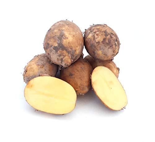 Kartoffeln Finka vorwiegend Festkochende deutsche Kartoffel, frische Ernte 2020, geeignet für Bratkartoffeln, Gratin, Kartoffelsalat, Ofenkartoffeln, Pellkartoffeln, Salzkartoffeln (10)
