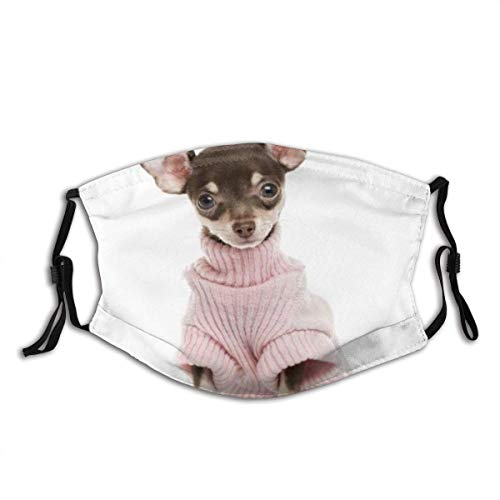 Bufanda Facial Unisex Reusable Nose Face Scarf Dog Chihuahua Puppy Sitting Looking Animals Wildlife Studio Dressed People Sweater Mouth Scarf Adjustable Earloops with Replaceable Filter