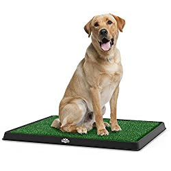 How to Choose an Indoor Dog Potty? Dogsized