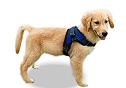 Golden Retriever puppy wearing a blue Copatchy no-pull dog harness.