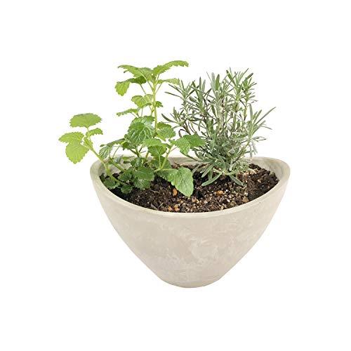 花のギフト社 ハーブ 季節のティー系 おまかせ 2種セット 鉢植え 3号鉢 エコ キッチン