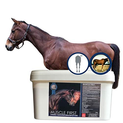 Aufbaufutter Muscle First I Vitamin B komplex T VIT E Amiosäuren I Muskelaufbau Pferd I Vitamine C D3 I Biotin Zink und Selen I Energy Booster Senior alte Junge Pferde hochdosiert 5Kg