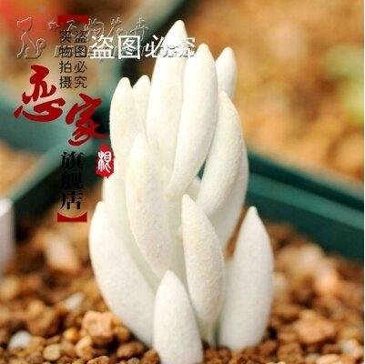 Imported pierre brute graines de fleurs, plantes grasses ,, il a aspiré l'effet du formaldéhyde et de purifier l'air - 100 graines
