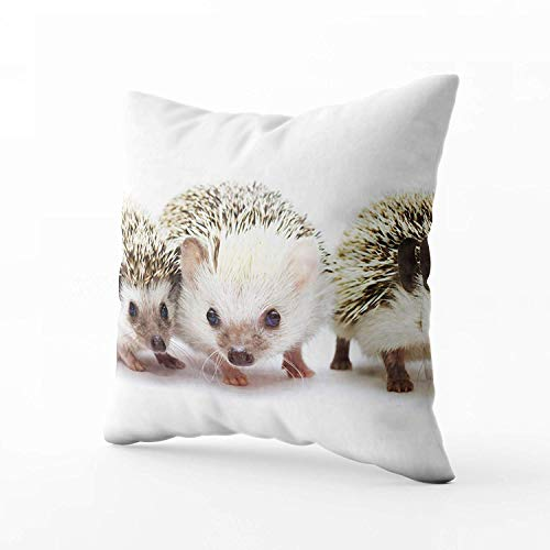 N\A Indoor Outdoor Pillows Covers, Beautiful Cute Hedgehog Baby Rodent Atelerix Albiventris Square Pillowcase Couch Sofa Inch Throw Cushion Cover