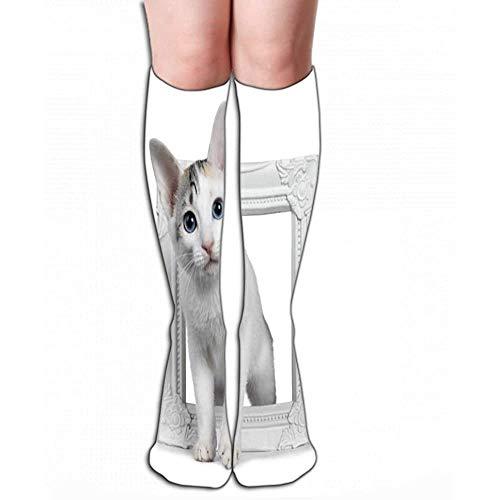 NGMADOIAN sokken schattig zilver shorthair Japanse Bobtail kat geïsoleerd wit fotolijst staand op baksteen maat L 50 cm