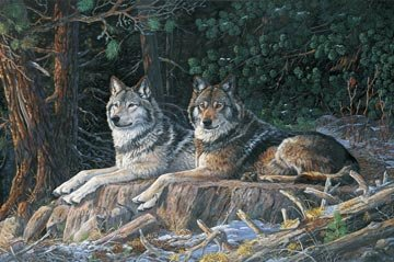 Resting Point Wolves Panel 28 X 44 Northcott Cotton Fabric