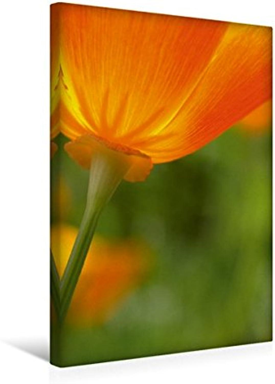 Calvendo Premium Textil-Leinwand 30 cm x 45 cm hoch, Lichtdurchflutet - Eine Goldmohnblüte im Gegenlicht   Wandbild, Bild auf Keilrahmen, Fertigbild auf Echter Leinwand, Leinwanddruck Natur Natur B01KV73YRW Optimaler Preis  | Züchtungen Eingeführt We