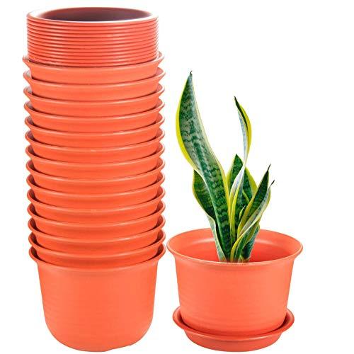 planta cactus fabricante ZOUTOG