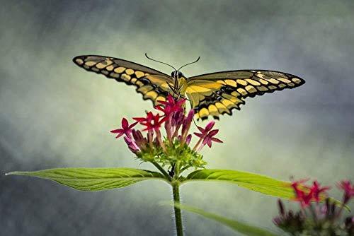 Adultos Puzzle 1000 Piezas DIY Clásico Educativo Rompecabezas  Papilio Dorado Niños Educativo Puzzles descompresión de Interesantes Juguete  50x75cm