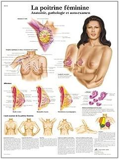 3B Scientific VR2556UU Glossy Paper La Poitrine Feminine Anatomie, Pathologie Et Auto-Examen Anatomical (The Female Breast Chart Anatomy, Pathology and Self-Examination Chart, French), Poster Size 20