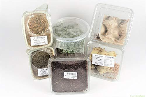 terra2go 6er Set - Erbsenblattläuse, Ofenfische, Heimchen, Trop. weiße Asseln und 2 Sorten Drosophila