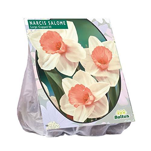 Narcis Salome 20 Stück Osterglocken Narzissen Blumenzwiebel