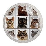 Lot de 4 boutons de tiroir avec 9 têtes de chat regardant la caméra pour la...
