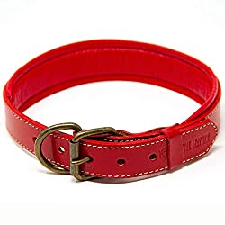 Best Dog Collar for labs