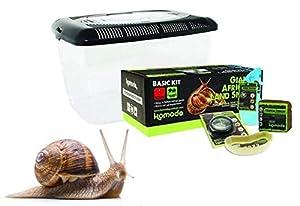 Komodo Basic Giant African Land Snail Kit (Land Snail Kit) by Komo-do