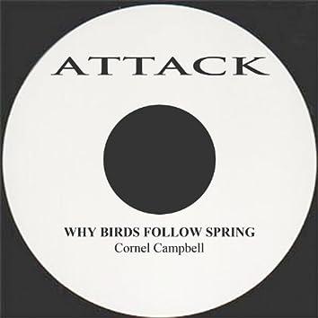 Why Birds Follow Spring