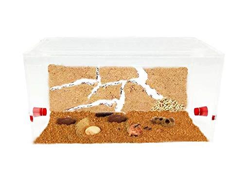 Anthillshop.es Ameisenfarm aus natürlichem Sand - Acryl 1 Set 20x10x10 cm (Ameisen mit Königin Free)