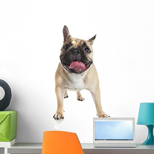 Wallmonkeys French Bulldog White Wall Decal Peel and Stick Graphic (24 in H x 17 in W) WM359393