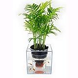 ZXW Maceta- Maceta plástica Transparente de la Planta de la irrigación Creativa...