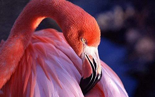 Jkykpp digitale olieverfschilderij vogel dieren geschenken voor doe-het-zelf decoratie van het huis 40 x 50 cm