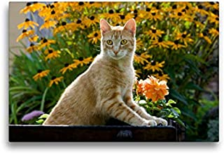 Premium - Lienzo de tela (45 x 30 cm, horizontal, diseño de gato curioso rojo en un jardín floreciente, imagen sobre bastidor, diseño de jardín floreciente (CALVENDO animal);CALVENDO Animales