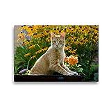 CALVENDO Premium Textil-Leinwand 45 x 30 cm Quer-Format Neugierige rot getigerter Katze in einem blühenden Garten, Leinwanddruck von Katho Menden