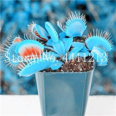 AGROBITS Big Promotion insectivores Plante en pot plantes carnivores Dionaea Mul-couleur géant clip Dionée Bonsai-100 pièces: 18