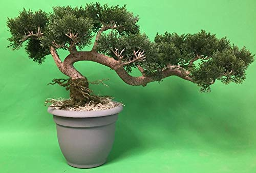 One 16 inch Tall by 27' Long Artificial Cedar Cypress Bonsai Tree UV Rated Plant Indoor Outdoor in an Oriental Gray Pot