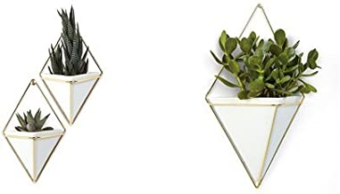 Umbra Trigg Hanging Planter Vase & Geometric Wall Decor Container - Great for Succulent Plants, Air Plant, Mini Cactus, Fa...