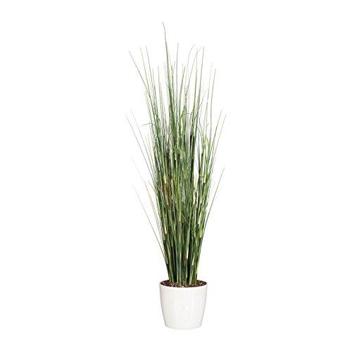 Pflanzen Kölle Kunstpflanze Equisetumgras in Grün, im Kunststofftopf, ca. 95 cm