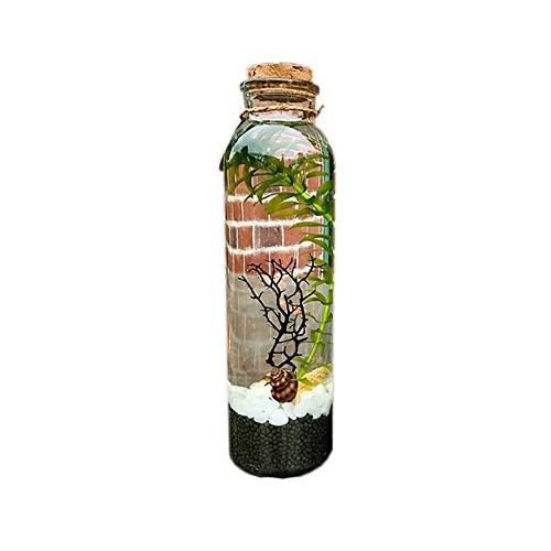 SZSCUTE Ecosphere, Ecosystem Aquarium Kit, Globe Glass Jar Mit Led Aquarium Pebbles Seashells Büro Schreibtisch Dekor Tisch Herzstück Einzigartige Geburtstagsgeschenke (Zylinderform)