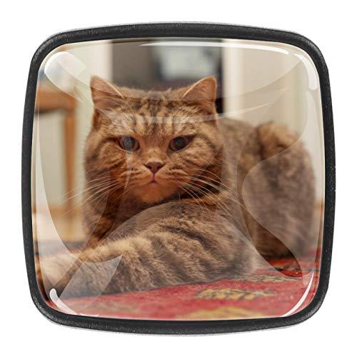 4 pomos redondos para armario de cocina, diseño de gato