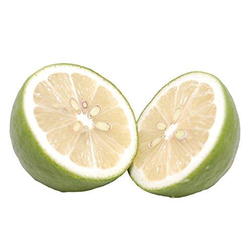 レモン 国産 希少 塩レモンに最適 熊本県三角産レモン 4kg(S〜L)