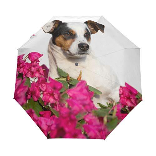 Kleiner Reiseschirm Winddichter Regen im Freien Sonne UV Auto Compact 3-Fach Regenschirmabdeckung - Schön posierender Jack Russel Terrier