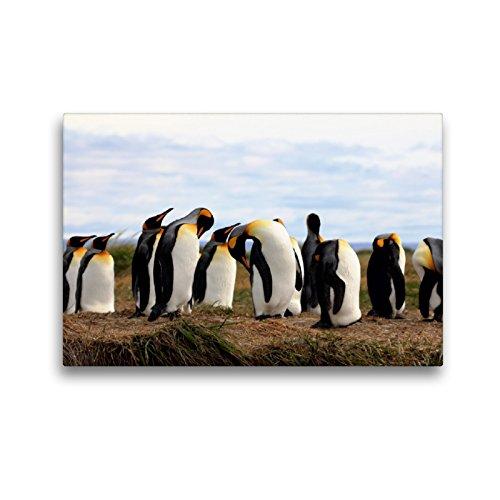 CALVENDO Premium Textil-Leinwand 45 x 30 cm Quer-Format Königspinguine, Patagonien, Feuerland, Chile, Leinwanddruck von Ute Köhler