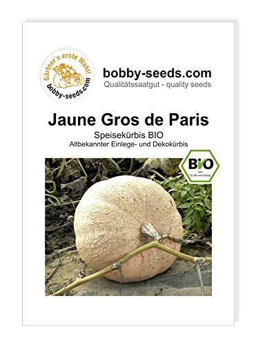 Jaune Gros -Gelber Zentner BIO Kürbissamen von Bobby-Seeds Portion