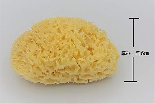 天然海綿ボディスポンジギリシャ産
