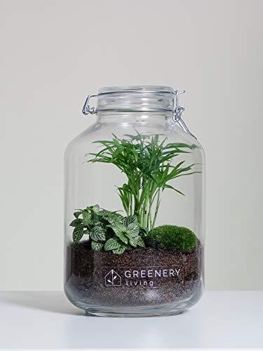 Flaschengarten Jar-2 DIY-Set/Terrarium/Biotop/Ökosystem (5 Liter): stilvolles Wohnaccessoire mit echten Pflanzen, ideal als Geschenk