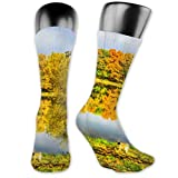 JONINOT 2 paquetes de calcetines deportivos ligeros y cómodos 40CM novedad divertida otoño bosque lago reflexión paisaje medias largas
