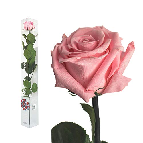 Echte Rose konserviert in verschiedenen Farben - 50cm - preserved, gefriergetrocknete Blumen mit Stiel und Blättern - lange haltbare Schnittblumen in Geschenkbox, beste Deko (Rosa)
