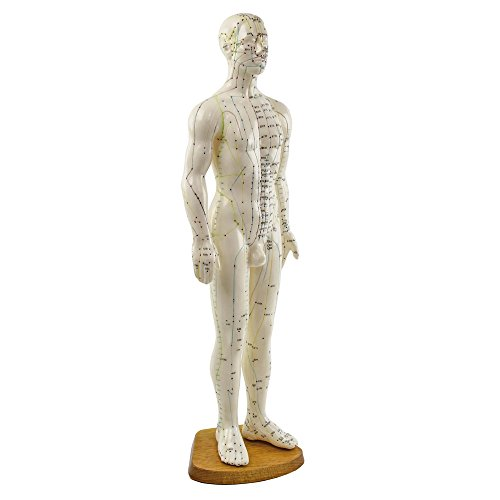 HeineScientific Akupunktur-Modell