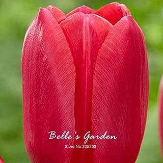 Tulip Joshi Garden Perennial Flowers 5pcs Rare Pink Red Tulip Bulbs Bonsai Tulip Flower Tulipa 'Pink Light' Home Potted Plants Perennial Bulbs