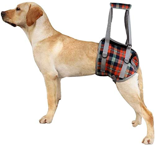 ZFQZKK Arnés de elevación de Perros, Recuperación de Perros Sling Ascensor Arnés Portátil Pet Rehabilitación Chaleco, para pequeños Perros Grandes el Aire Libre (Color : Orange, Size : Xlarge)