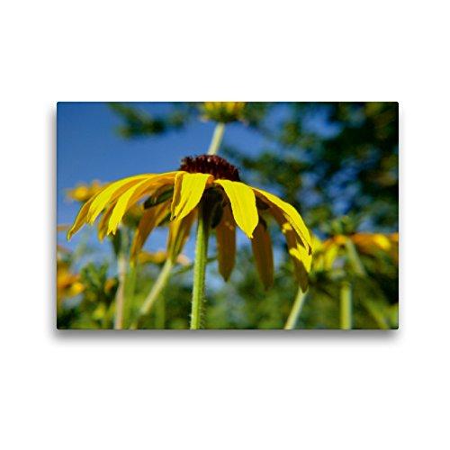 Premium Textil-Leinwand 45 x 30 cm Quer-Format Gelber Sonnenhut   Wandbild, HD-Bild auf Keilrahmen, Fertigbild auf hochwertigem Vlies, Leinwanddruck von Lucy M. Laube