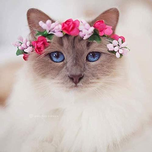 Coronas para gato - diadema para perros pequeños - corona de flores para mascotas