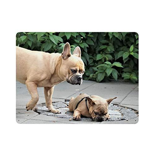 Bulldog y perro bebé (1) pintura de la naturaleza decoración vintage para el hogar, letrero de arte de pared de 15.7 'x 11.8' decoración de pared de café familiar, pintura de arte retro, cartel de pl