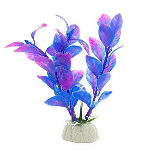 DIGIFLEX 10 x verschiedene Aquariumpflanzen Aquarien - 7