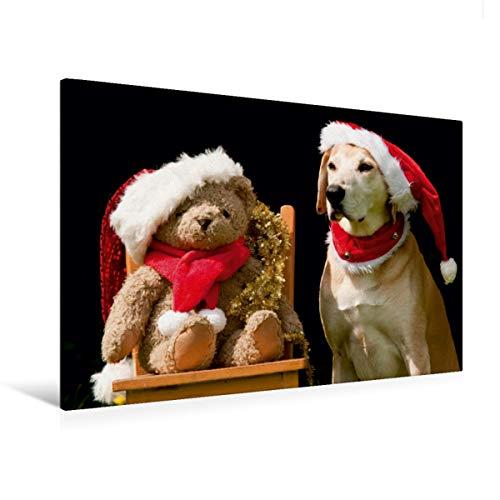 Calvendo Premium Textil-Leinwand 120 cm x 80 cm Quer, Frohe Weihnachten!   Wandbild, Bild auf Keilrahmen, Fertigbild auf Echter Leinwand, Leinwanddruck: Azawakh-Ridgeback mit Teddy Tiere Tiere