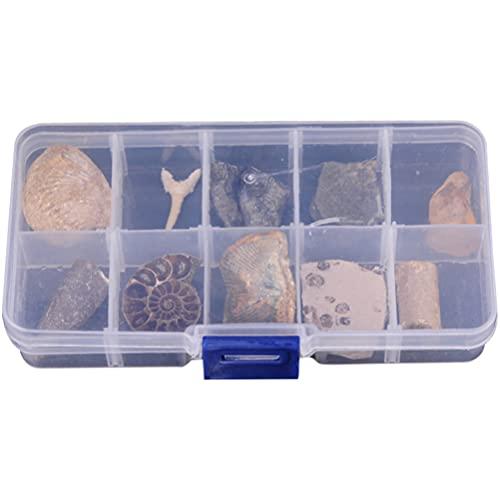 iplusmile 10Pcs Fossil Sammlung Kit Paläontologie Fossilien Enthält Eine Shark Zahn Fossilen Ammoniten Shell Paar Trilobite Und Orthoceras